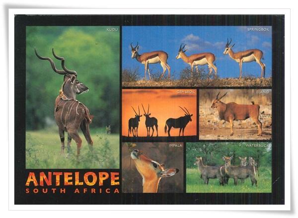 antelope of souch africa.jpg