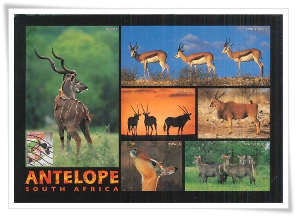 antelope of souch africa1.jpg