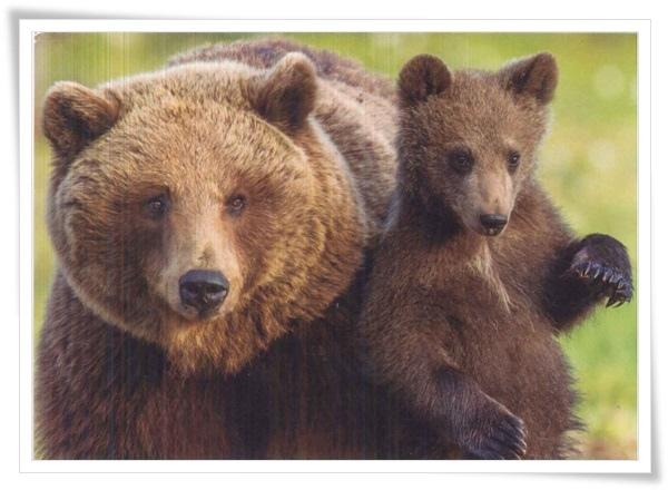 bear and baby_FI.jpg