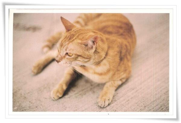 ID-cat.jpg