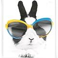 fashion bunny.jpg