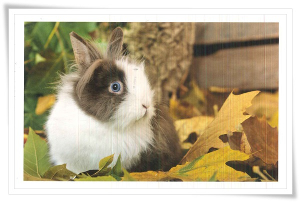 bunny with blue eyes.jpg