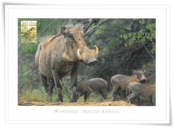 warthog1.jpg