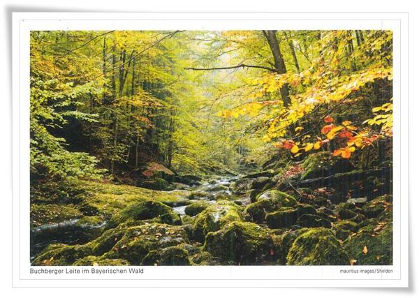 bayerischen wald.jpg