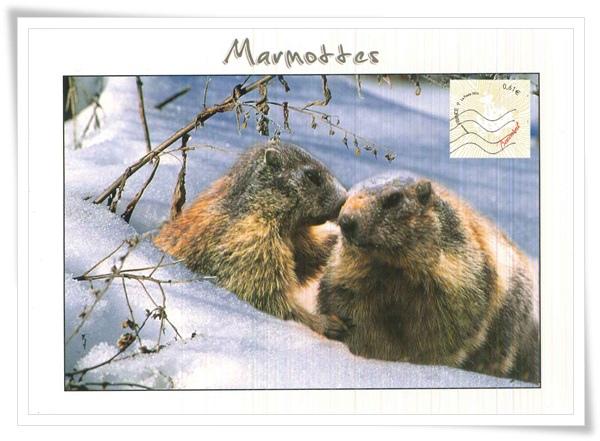 marmottes1.jpg