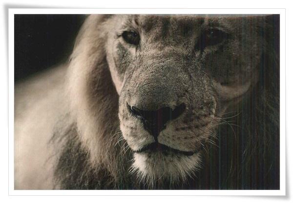 happy card-lion.jpg