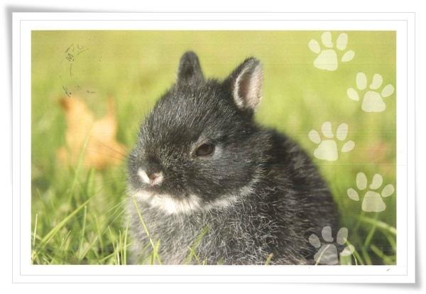 gray bunny.jpg