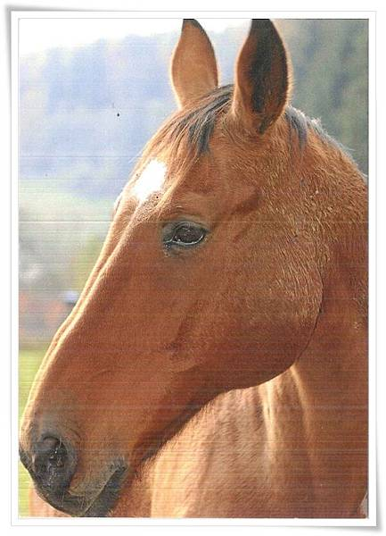 horse_DE.jpg