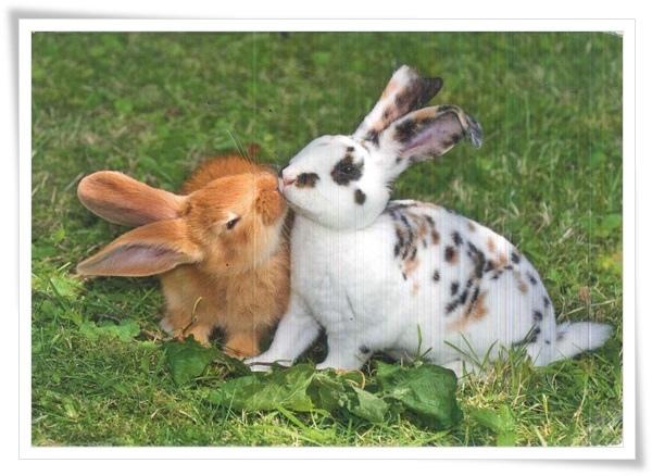 rabbit kiss.jpg