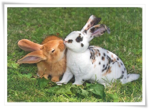 rabbit kiss.jpg