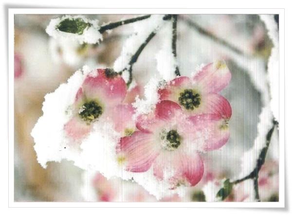 flower with ice.jpg