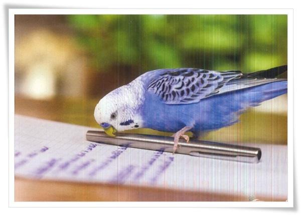 parrot_US.jpg