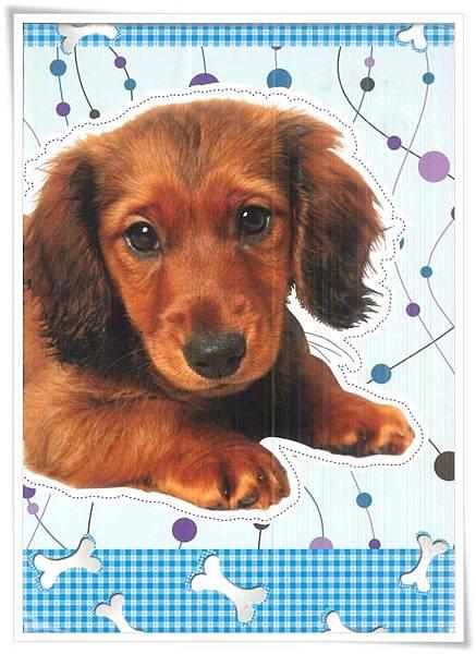 Long-haired dachshund.jpg