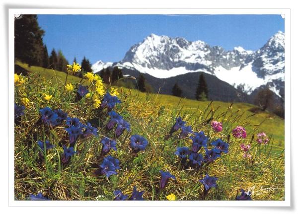 alpenflora.jpg