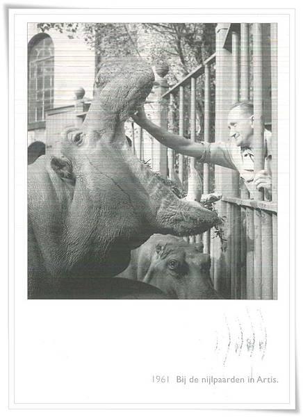 bij de nijlpaarden in artis.jpg