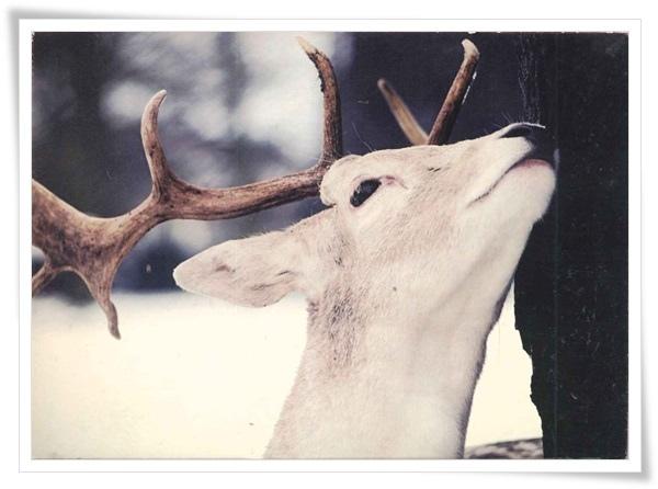 deer_CN.jpg