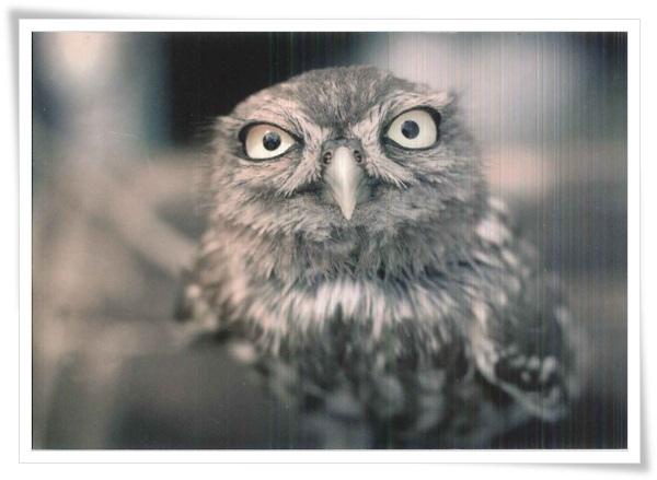 owl_RU