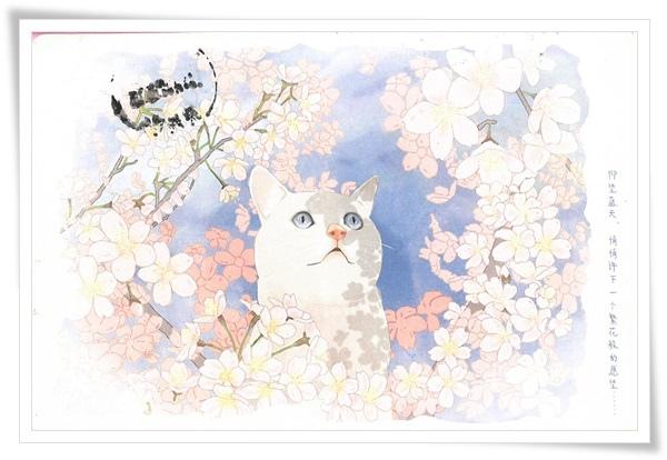 櫻花貓.jpg