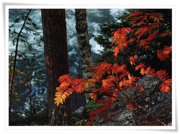 FI autumn.jpg