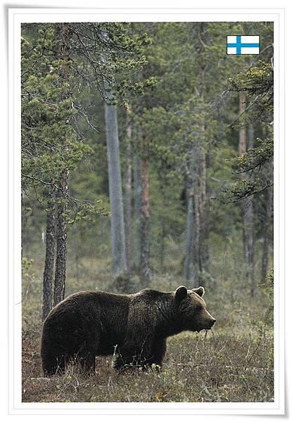 FI bear.jpg