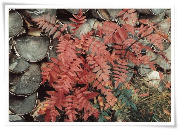 FI_image autumn.jpg
