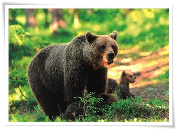 bear's family.jpg
