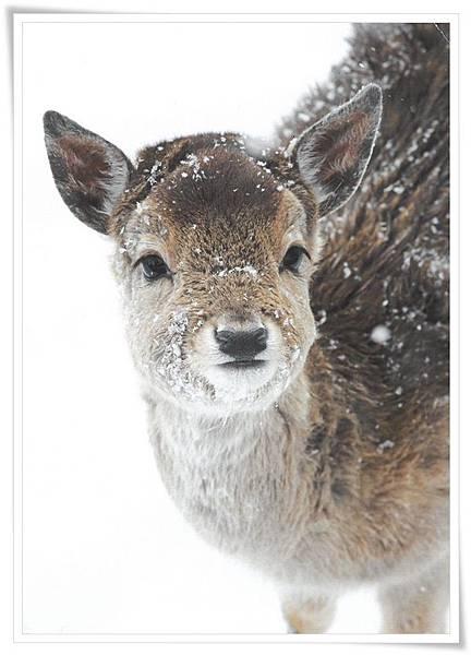 dammwild im schnee