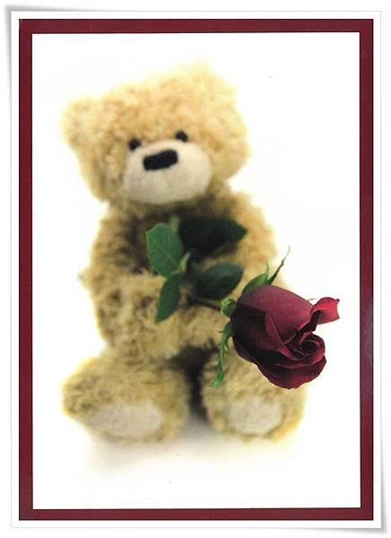 teddy rose.jpg