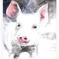 happy pig.jpg