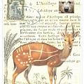 antilope1.jpg