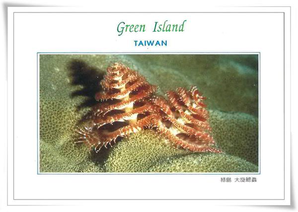 綠島 大旋鰓蟲.jpg