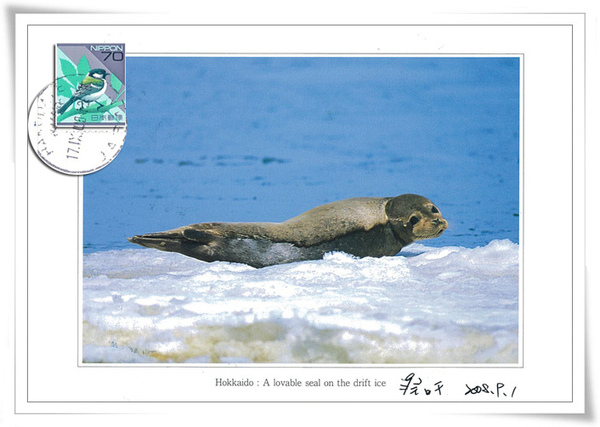 <<北海道>>Hokkaido: A lovable seal on the dirft ice