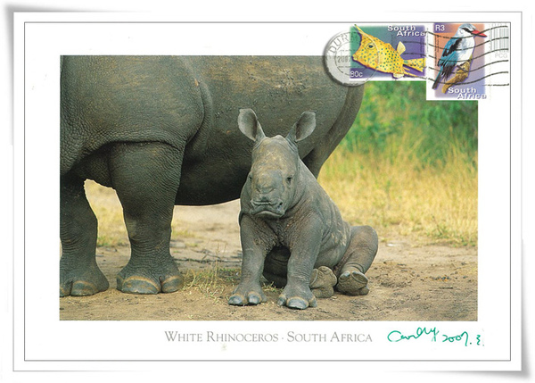 WHITE RHINOCEROS <South Africa>