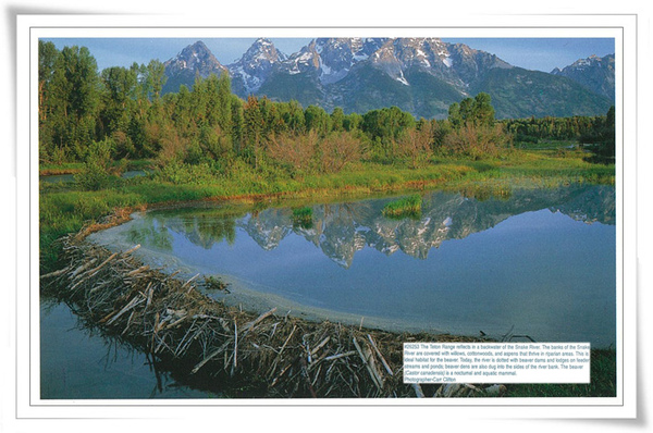 GRAND TETON NATIONAL 4.jpg