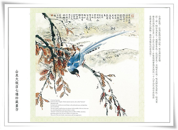 台灣藍鵲6.jpg