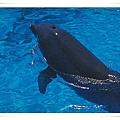 griechenland dolphin.jpg