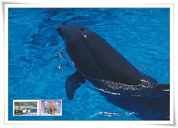 griechenland dolphin1.jpg