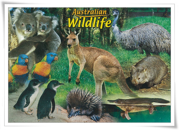 Australian wildlife.jpg