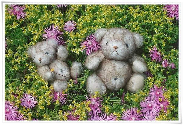 新加坡 泰迪熊.jpg