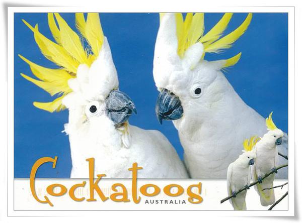 cockatoos.jpg