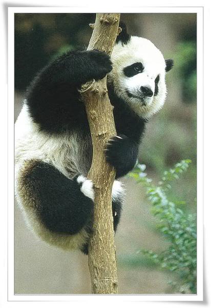 熊貓6.jpg