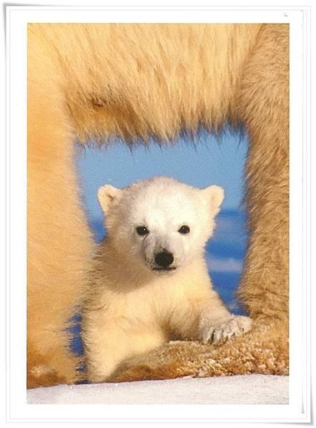 看風景的 北極熊.jpg