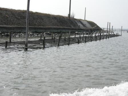 培養中的蚵棚