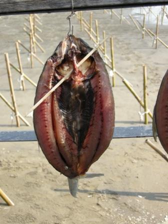 虱目魚take2