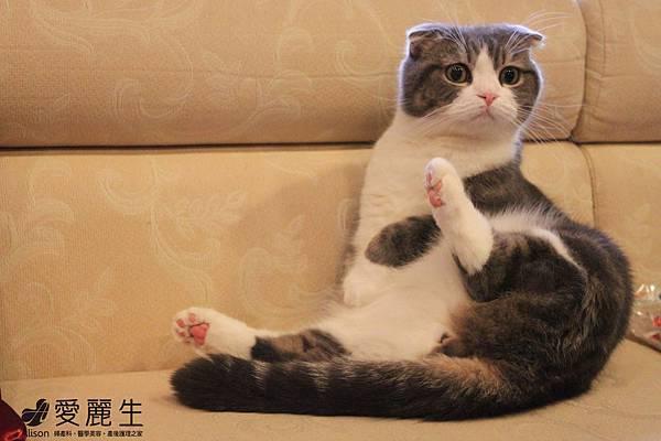 愛麗生婦產科潘俊亨院長的貓.JPG