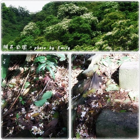 20100417-1.jpg
