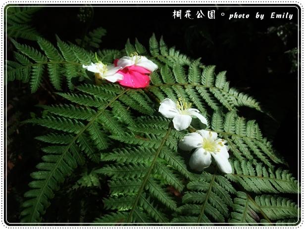 20100417-4.jpg