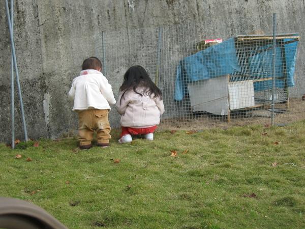 有兔兔和天竺鼠ㄟ