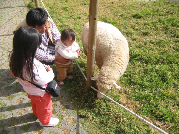 羊咩咩肚子很餓