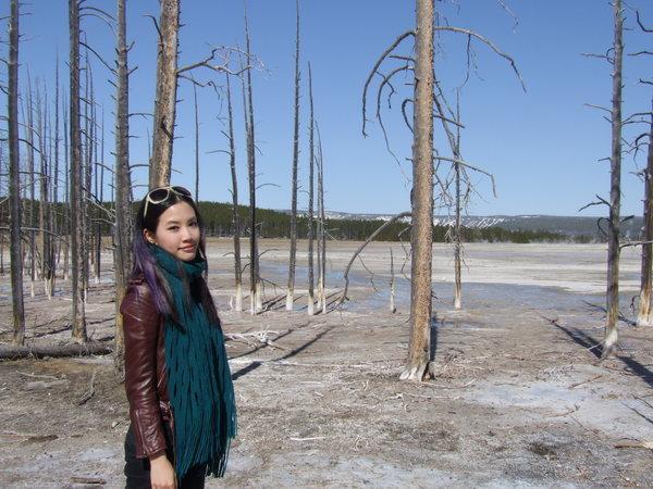 被大火燒過的枯樹們還是直挺挺的站立著